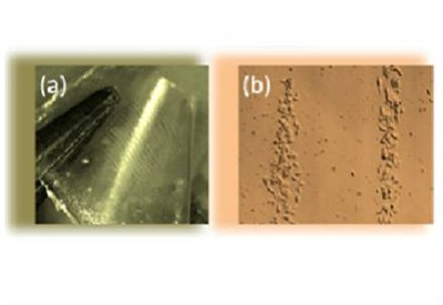 Immagini al microscopio: (a) pellicola elettrizzata con strisce cariche di segno opposto; (b) cellule cancerose confinate sulle strisce cariche