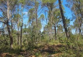 ENERGIE RINNOVABILI/ La filiera europea delle biomasse sente il richiamo della foresta