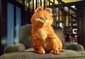 BLOOPERS/ La bottiglia di Garfield, la mano di Black Cat e gli errori nei film coi gatti