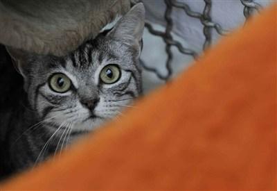 Un gatto, immagine di repertorio (Infophoto)