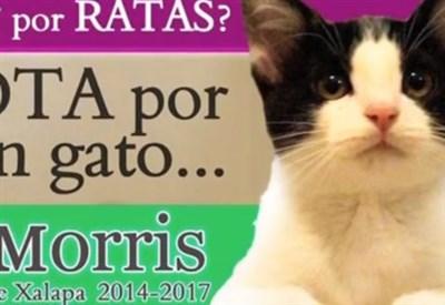 Il gatto Morris
