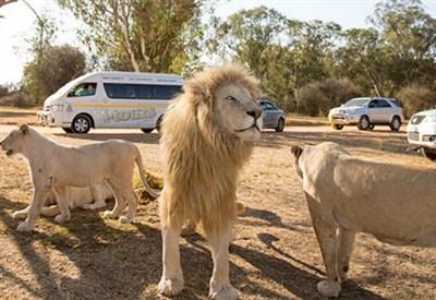 Lion Park, Sudafrica