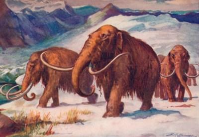 Immagine dal web