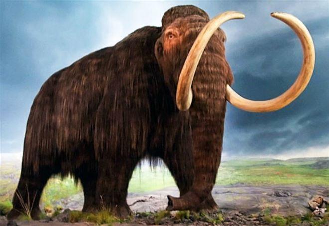 Un mammut