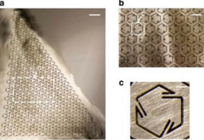 Il nuovo metamateriale con ingrandimento delle microstrutture (Credit Guoliang Huang)