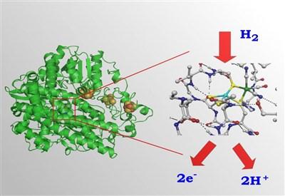 L'enzima nichel-ferro idrogenasi (a sinistra) e il sito catalitico (a destra) con in evidenza un atomo di nichel e uno di ferro