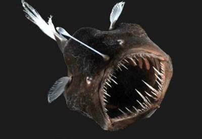Il pesce diavolo