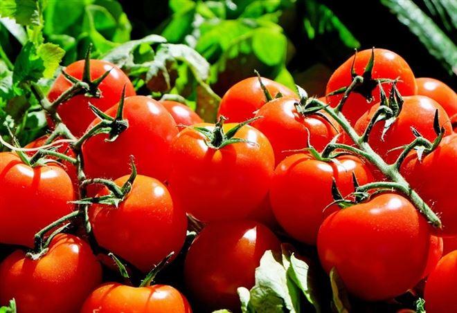 I pomodori hanno proprietà antitumorali