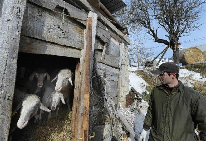 Pecore in arrivo nel centro di Roma? LaPresse