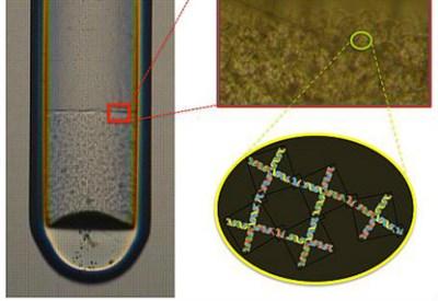 Capillare in cui le nanostelline di Dna si aggregano formando un tessuto gelatinoso che sedimenta verso il basso