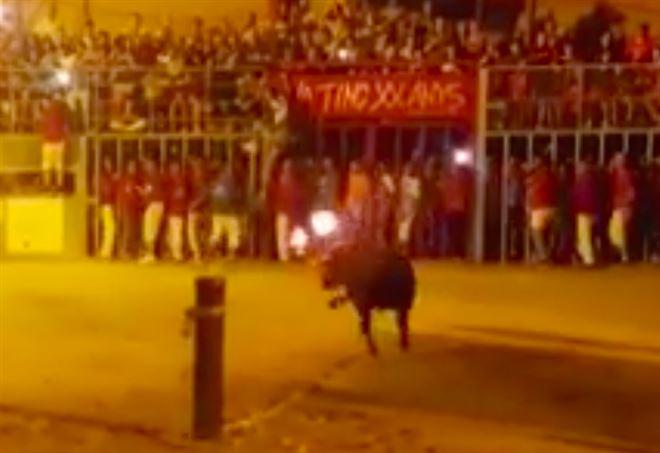 Toro ucciso in Spagna (foto Facebook)