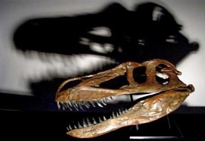 Torvosaurus (Credit: Christophe Hendrickx; CC-BY)