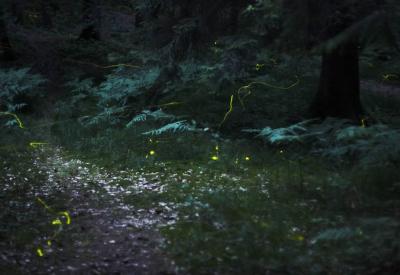 Un volo notturno di lucciole