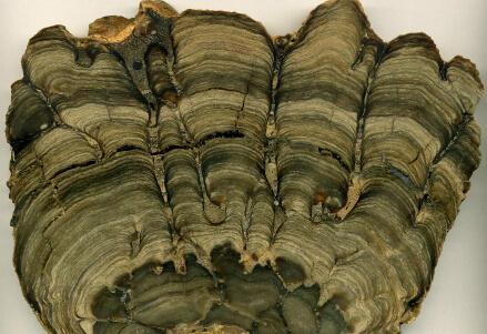 VITA SULLA TERRA/ La scoperta: il più antico fossile mai trovato, è giunto da Marte?