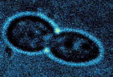 nanocapsuleR375_20mag09.jpg